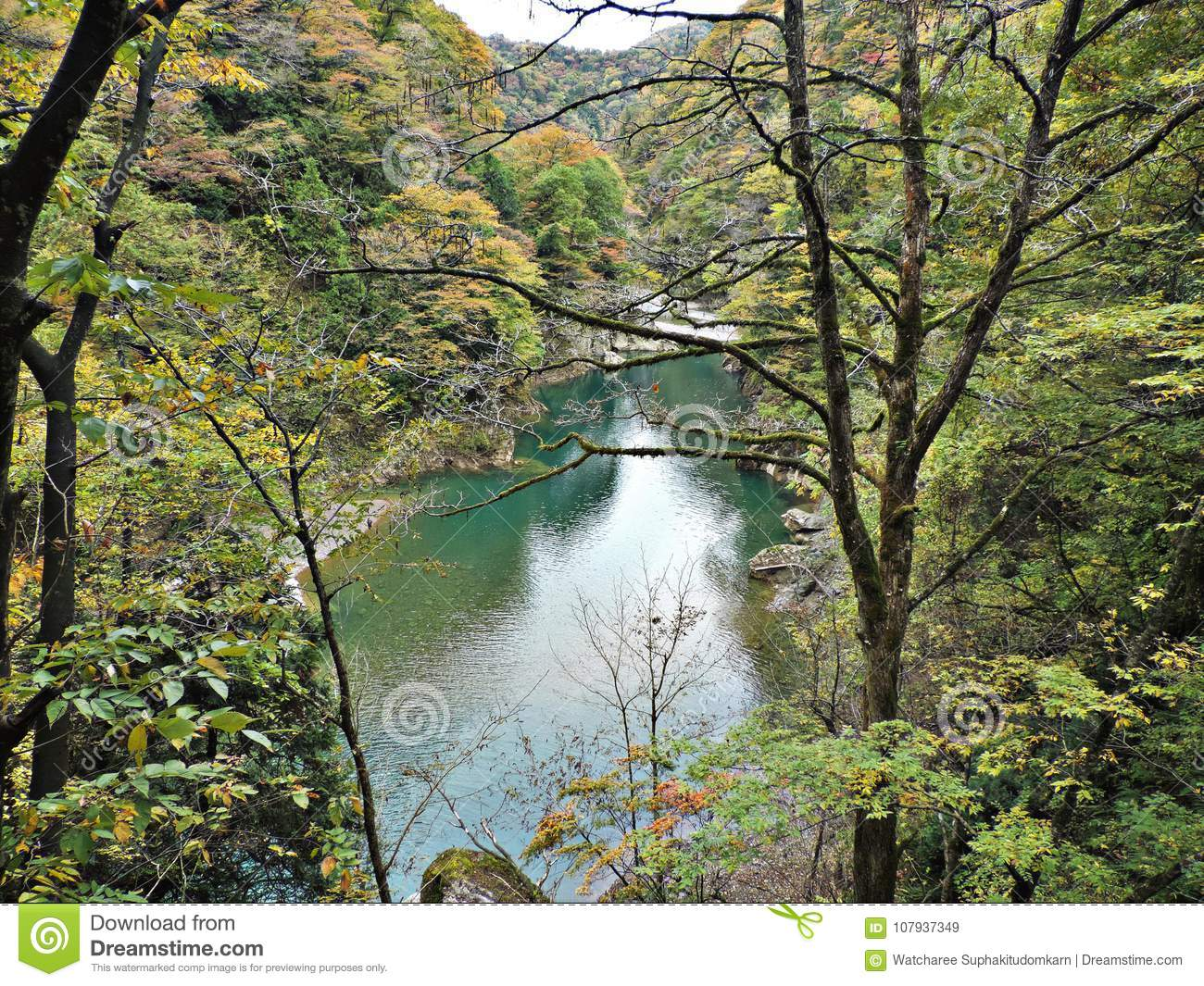 Scenery of leaves color change and turquoise water stream at Dakigaeri Gorge in Japan.