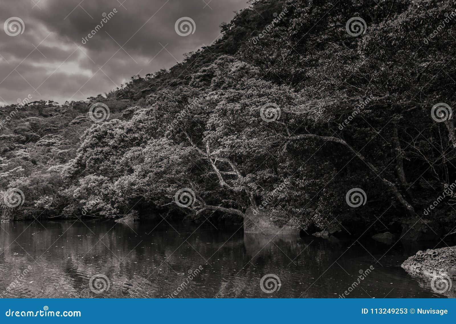 Okinawa japan beautiful scenery of urauchi river mangrove forest in black and white iriomote island