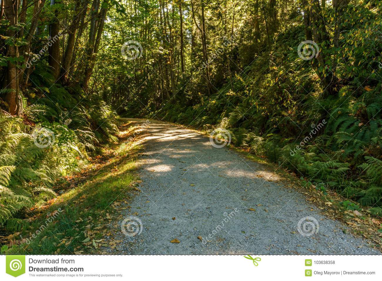 Scenic and beautiful hiking gravel road or trail in the forest.