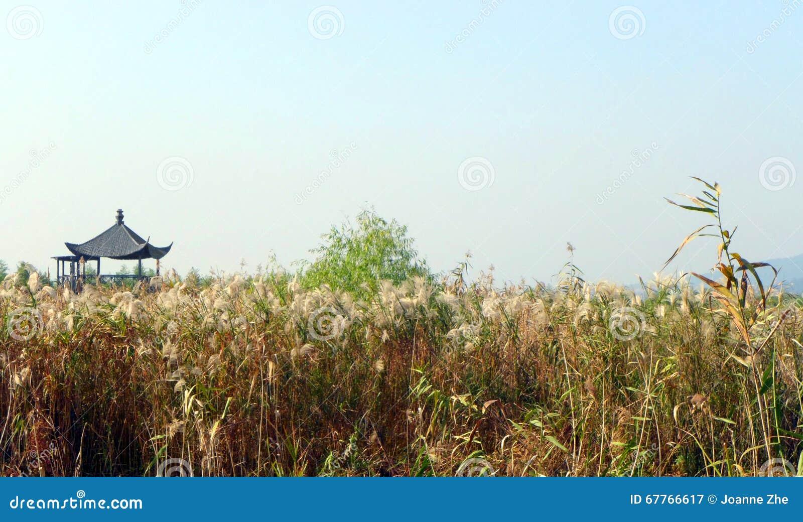 Scenic China wetland marshes nature park