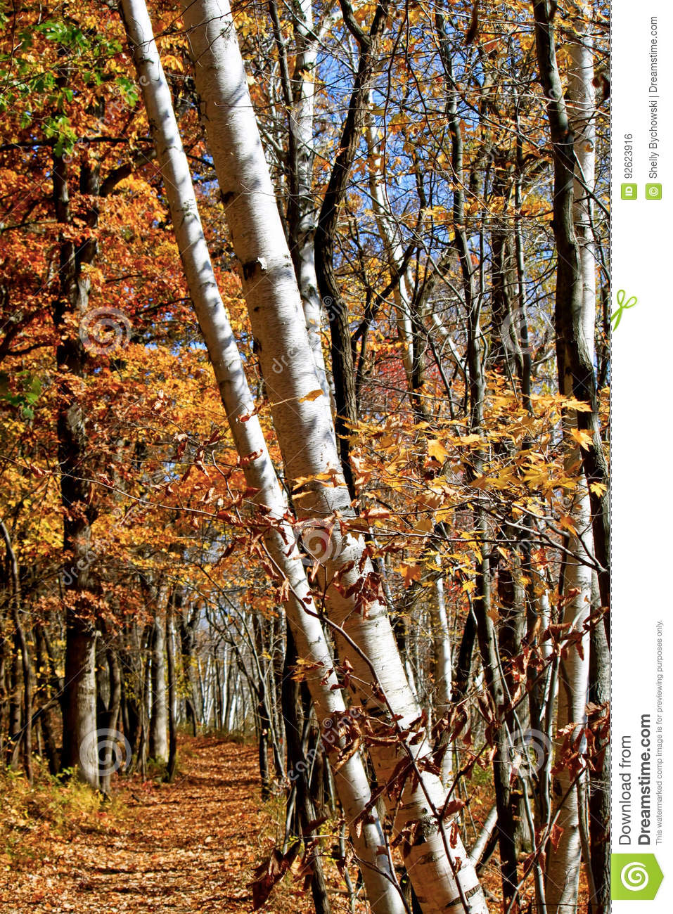 Scenic Forest in Indiana stock photo  Image of fall, bark - 92623916