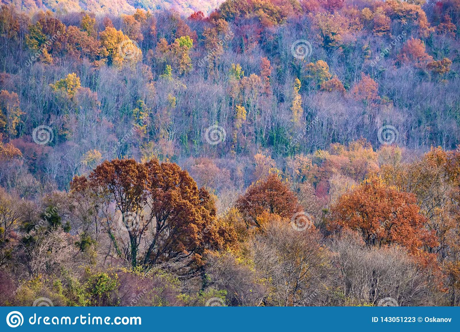 Scenic landscape of autumn forest in mountains