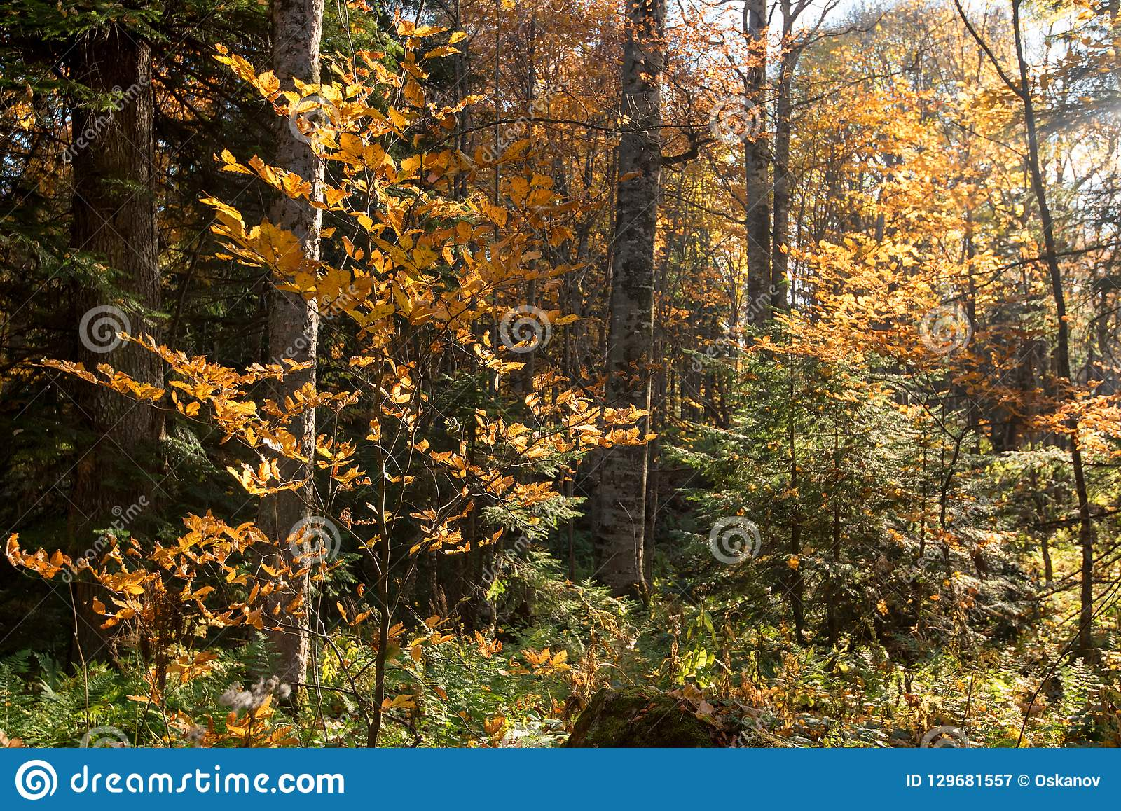 Scenic landscape of beautiful sunlit autumn forest
