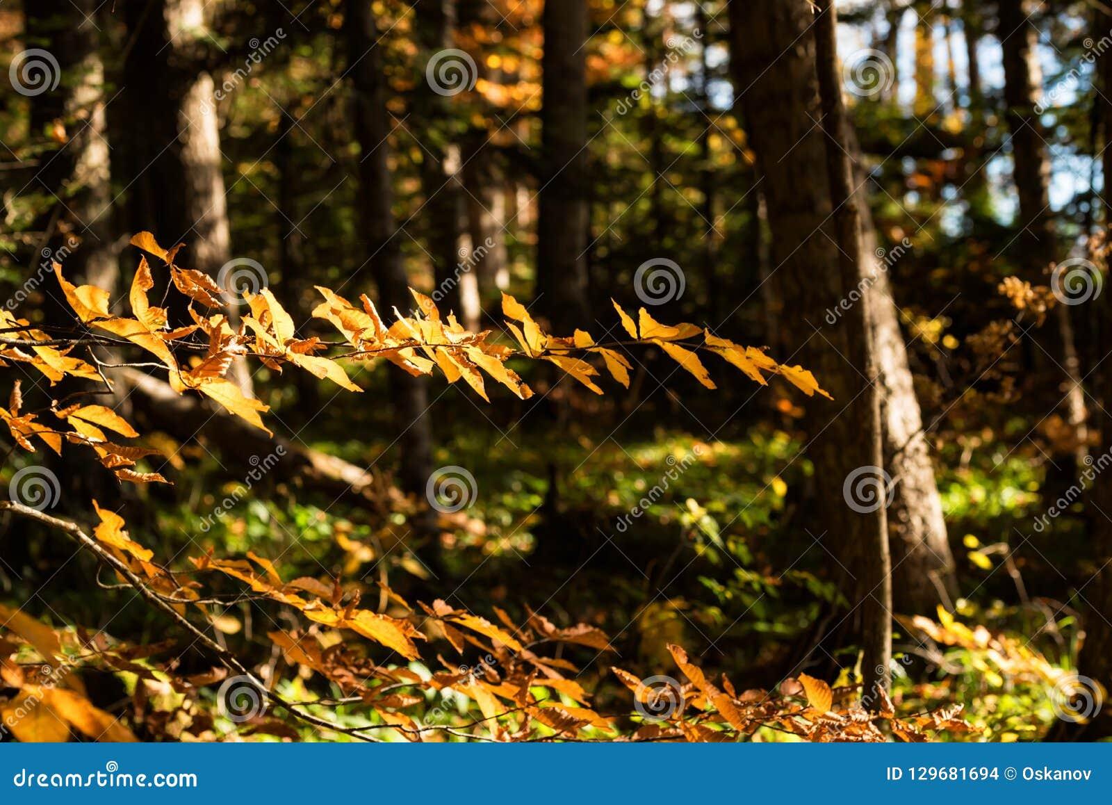 Scenic landscape of beautiful sunlit autumn forest