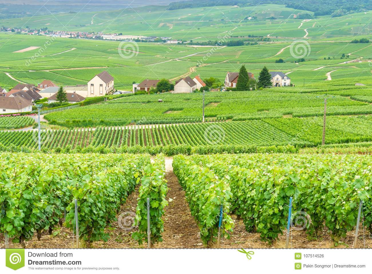 Scenic landscape in the Champagne, Vineyards in the Montagne de Reims