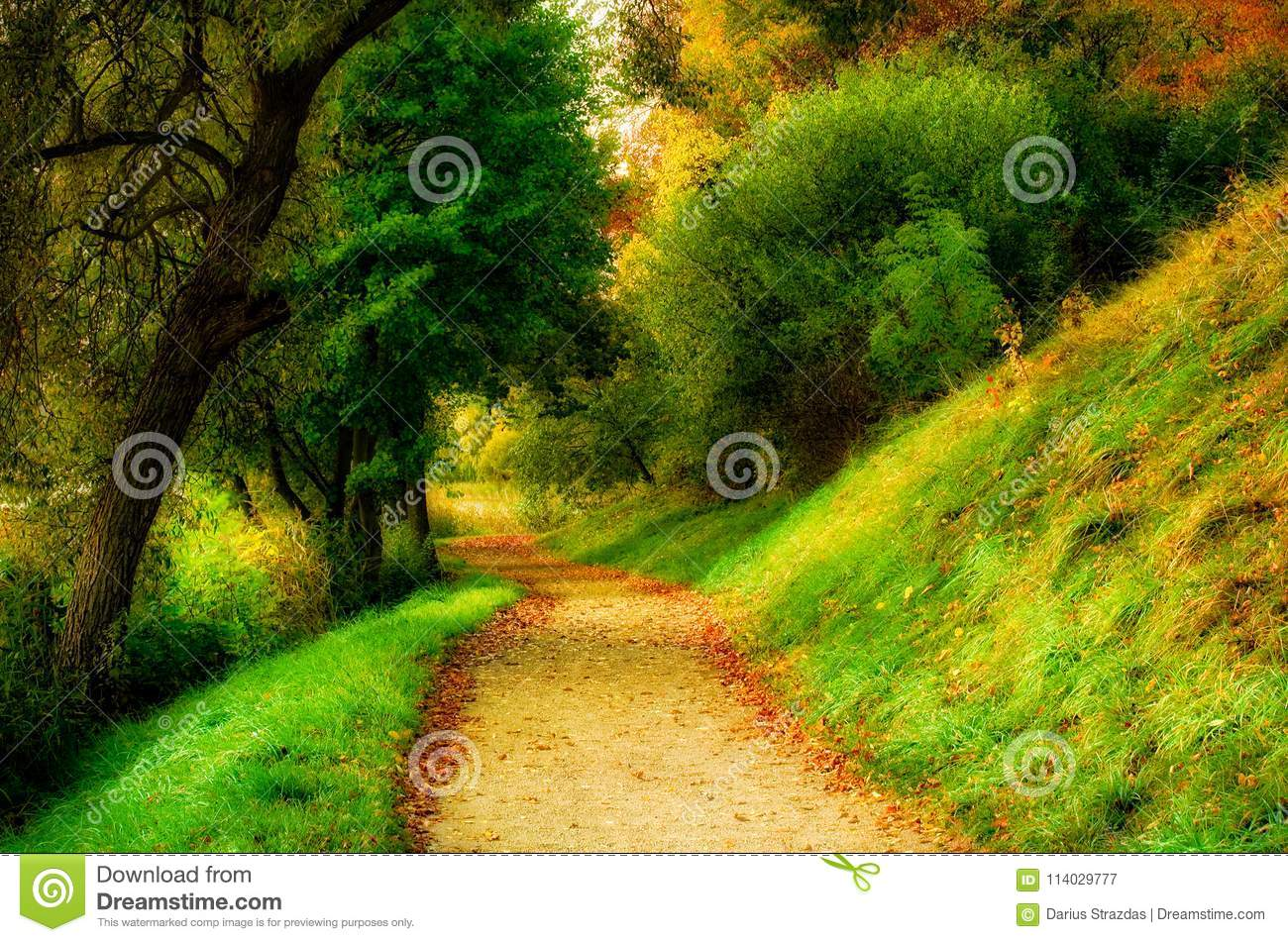 Scenic nature landscape of countryside path through forest