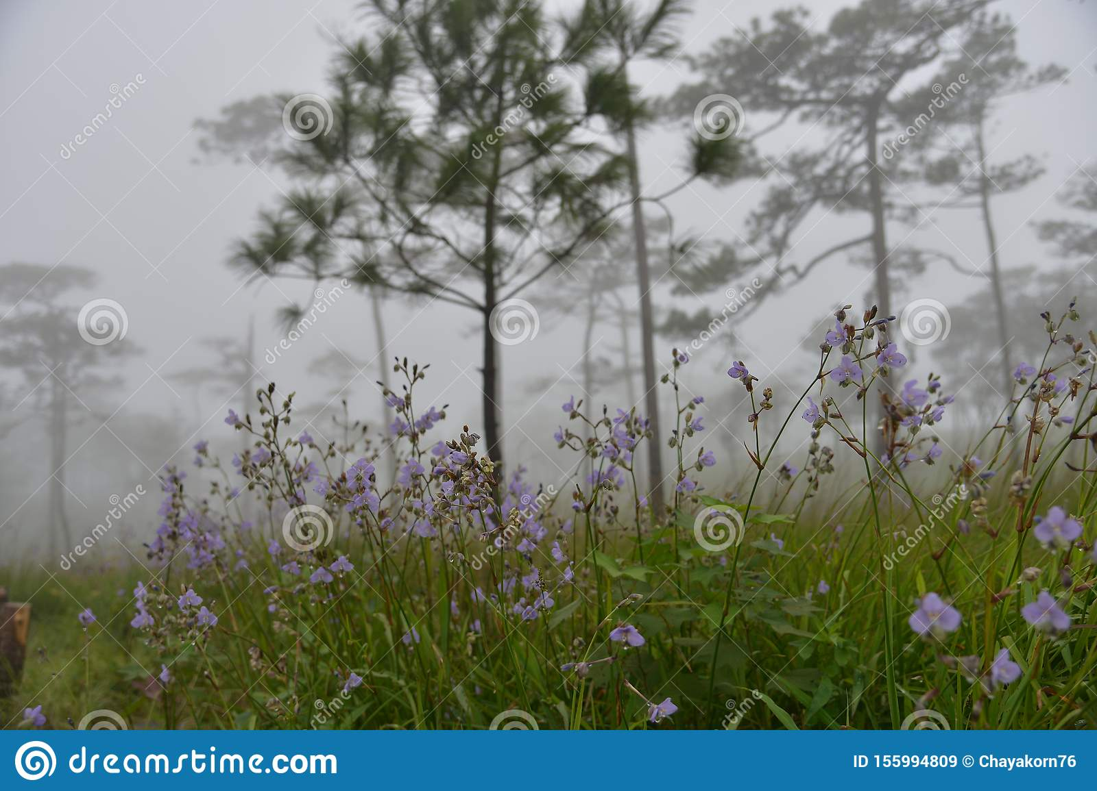 Scenic of Nature at Phu Soi Dao National Park