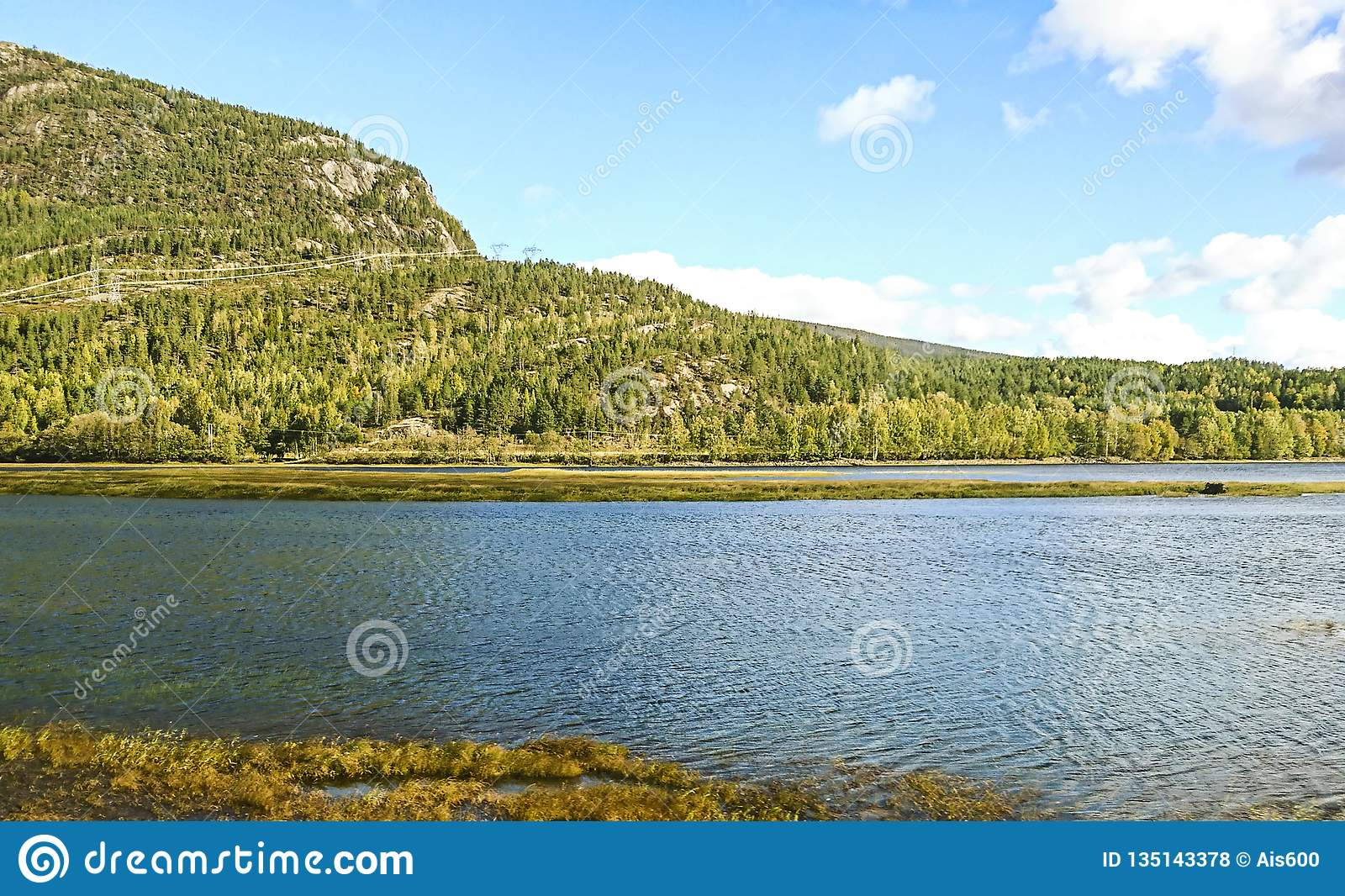 Scenic Norway landscape in a daylight with the river, forest and stones in the front of view.