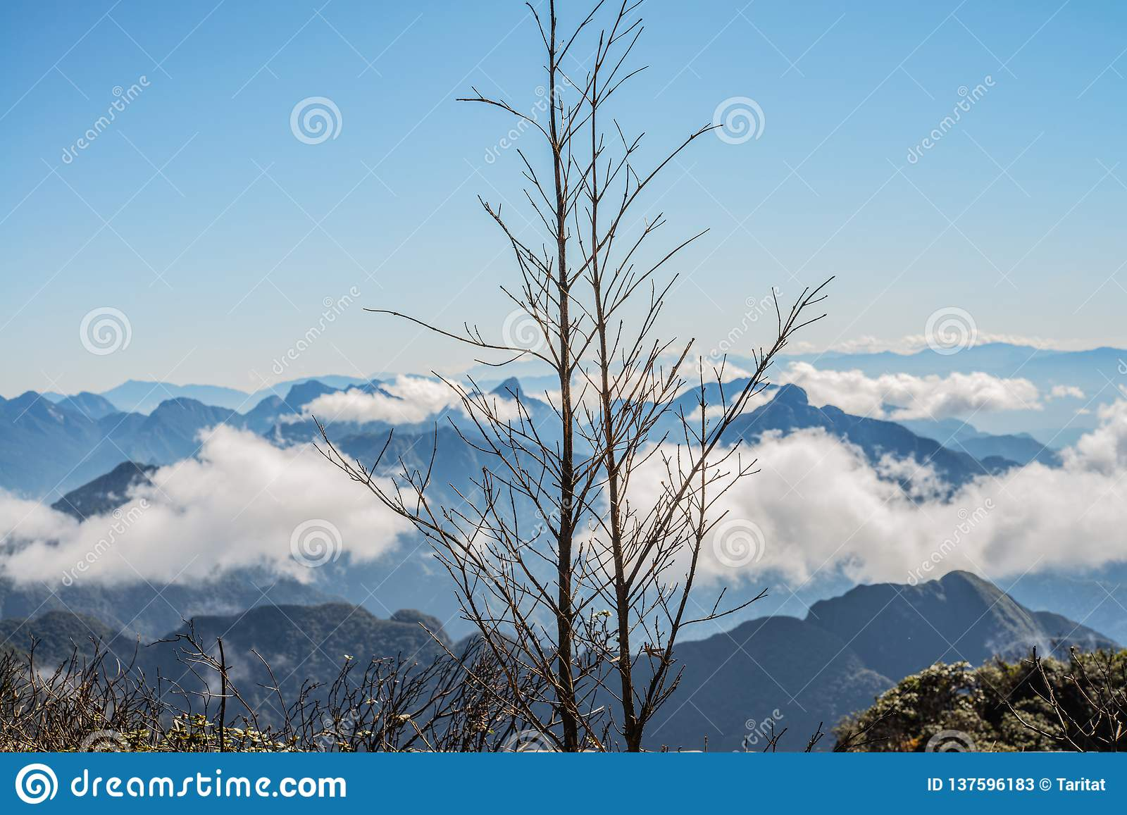 A scenic view of Heaven on earth, Fansipan highest mountain,Sapa,Vietnam