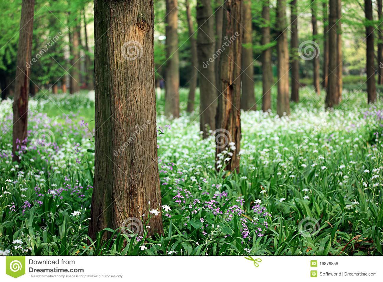 Scenic view of tree trunks with wild flowers royalty free stock photos image 19876858 - Flowers that grow on tree trunks ...