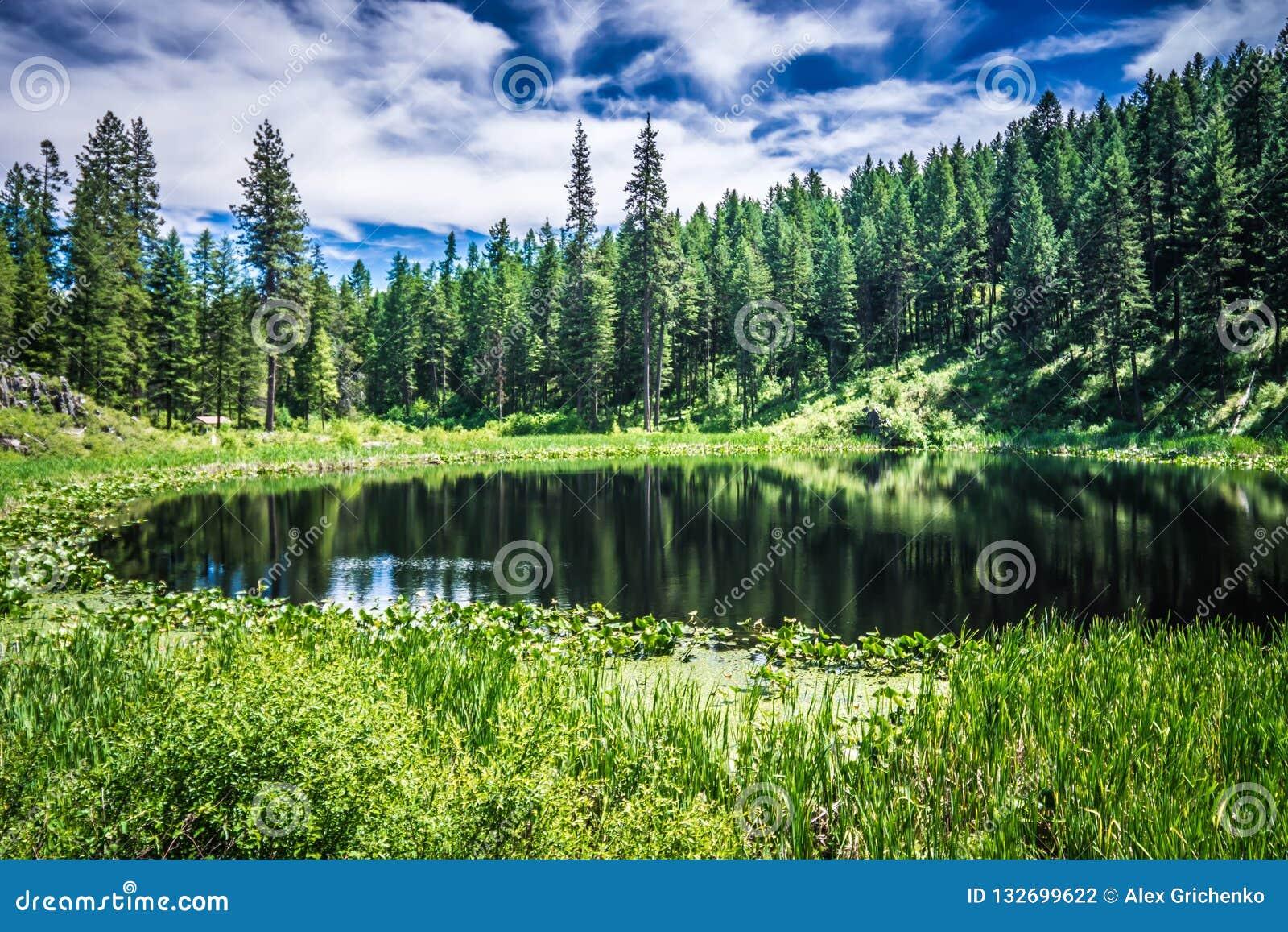 Scenics della natura intorno al fiume Washington di Spokane