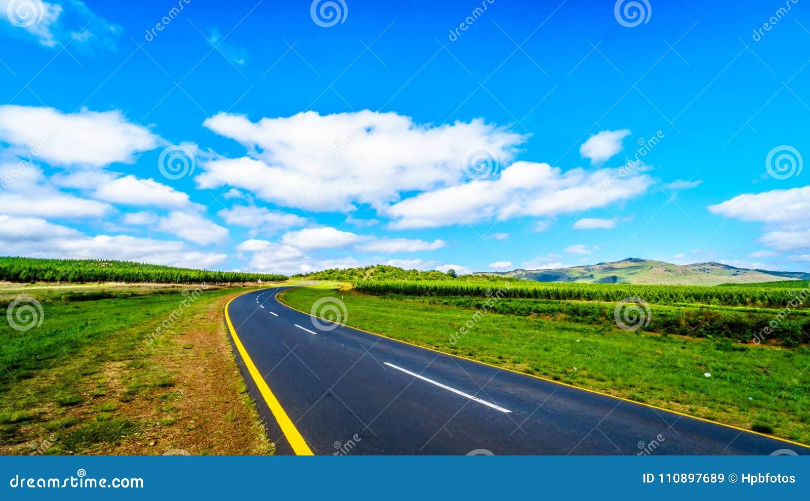 Sceniczna autostrada R538 przez highveld z swój wiele sosen plantacjami między Hazyview i Whiteriver