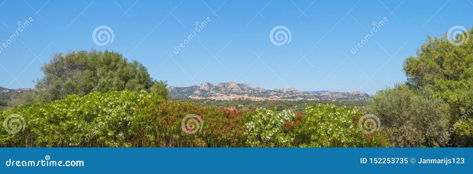 Sceniczny krajobraz zieleni wzgórza i skaliste góry wyspa Sardinia
