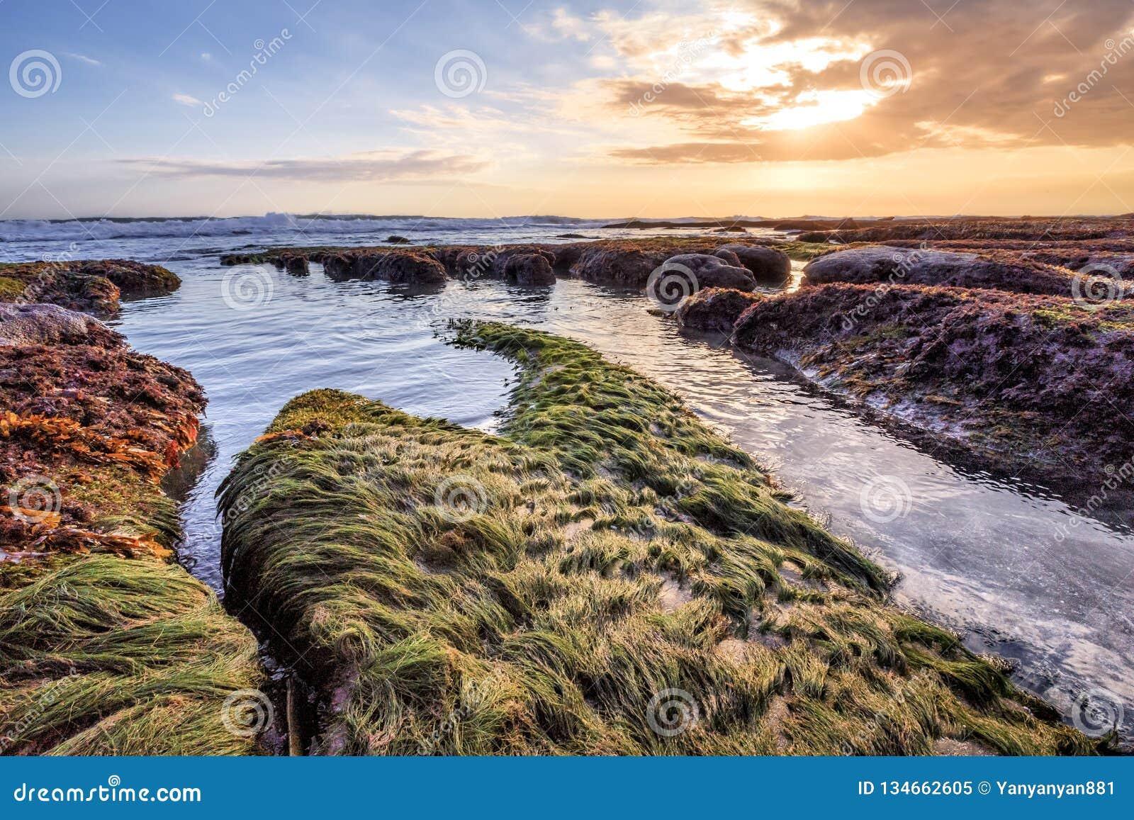 Scenisk kustlinje av havsgräs i Bali Indonesien