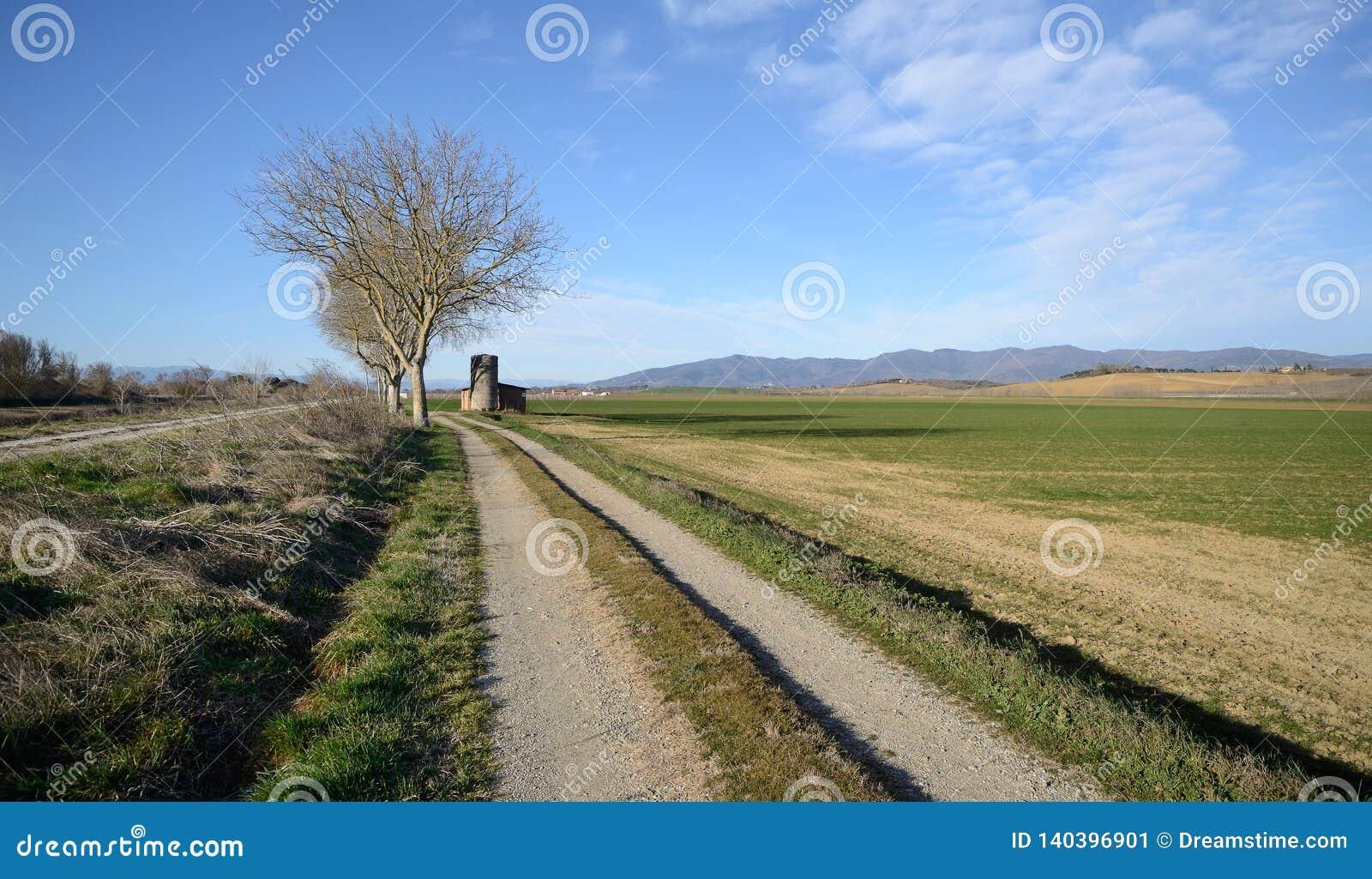 Scenisk sikt av jordbruks- fält n den Tuscan bygden