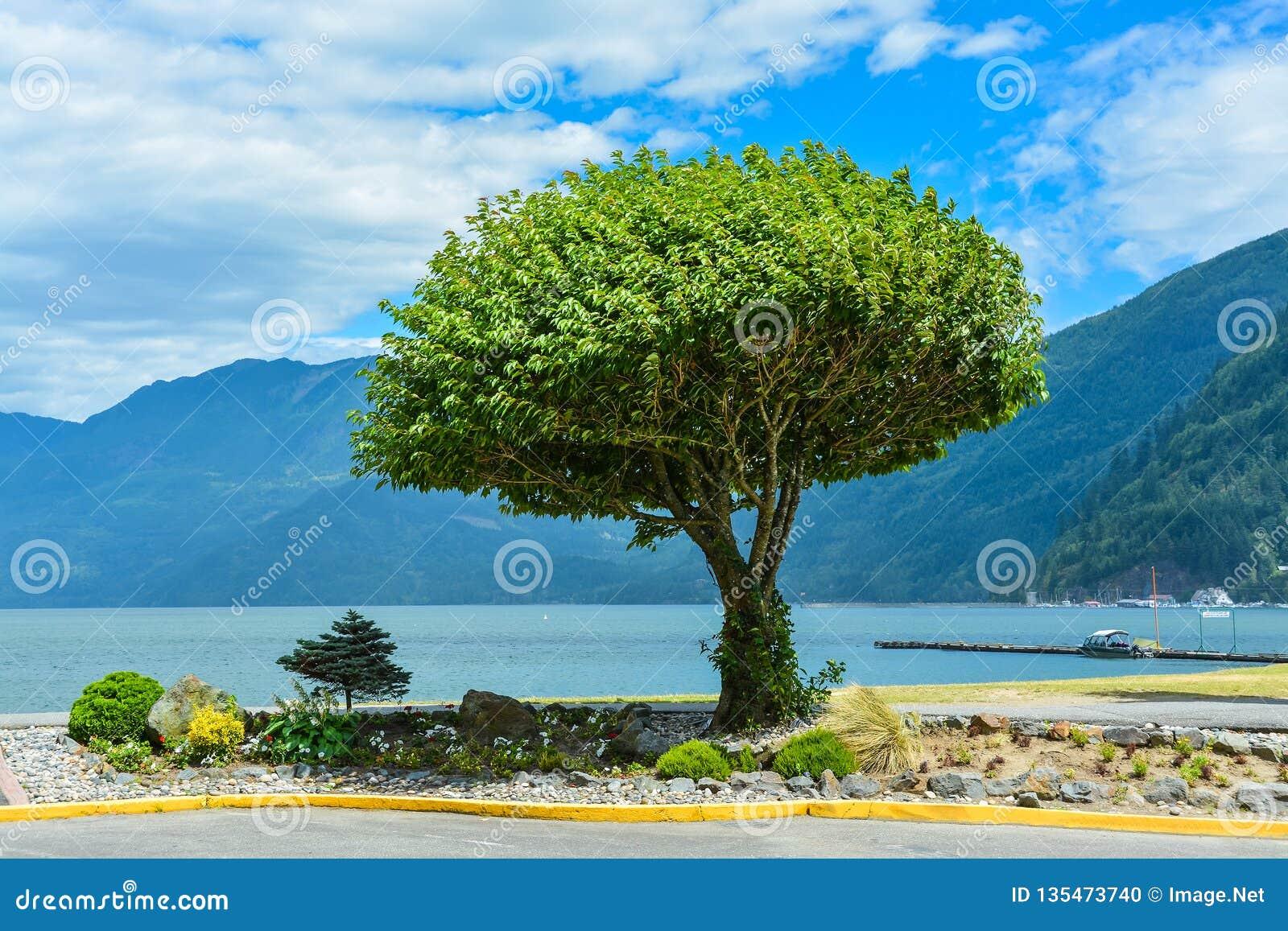Scenisk sikt på Harrison sjön med det ensamma trädet på kusten Fred av meningssikten