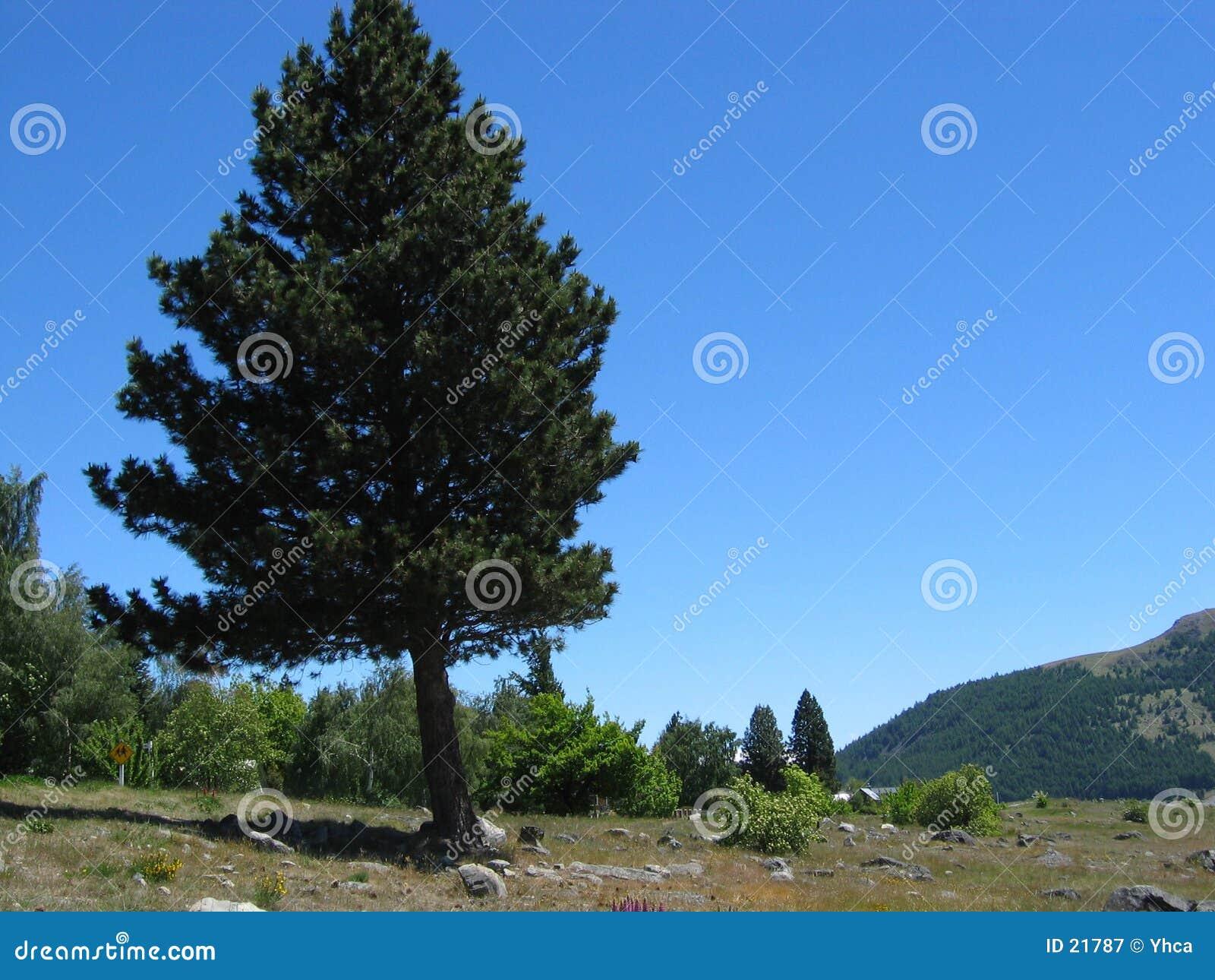 Scenisk tree för bygd