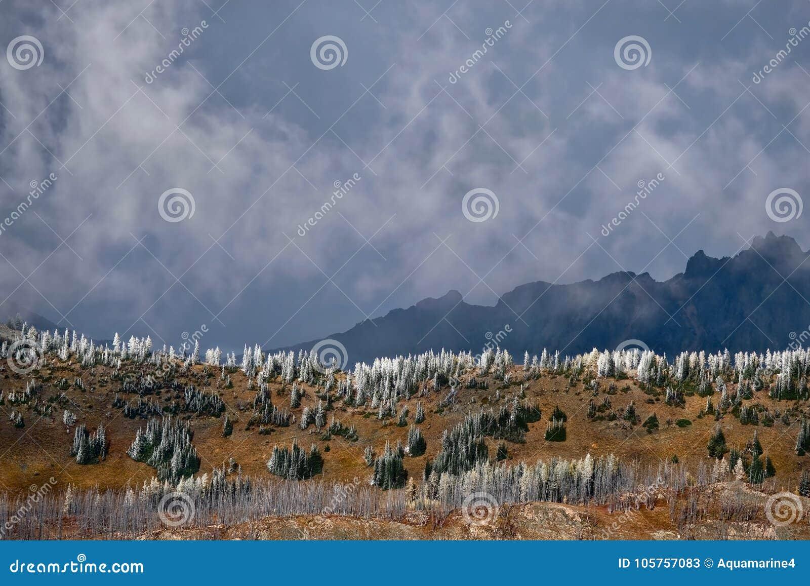 Sceniskt landskap för norr kaskadnationalpark