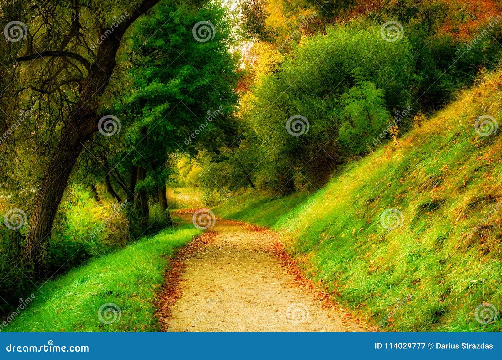 Sceniskt naturlandskap av bygdbanan till och med skog