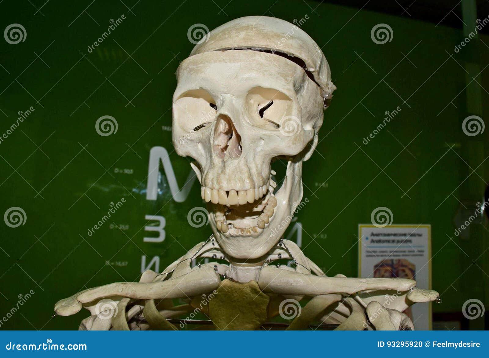 Schädel, Anatomie redaktionelles bild. Bild von zähne - 93295920