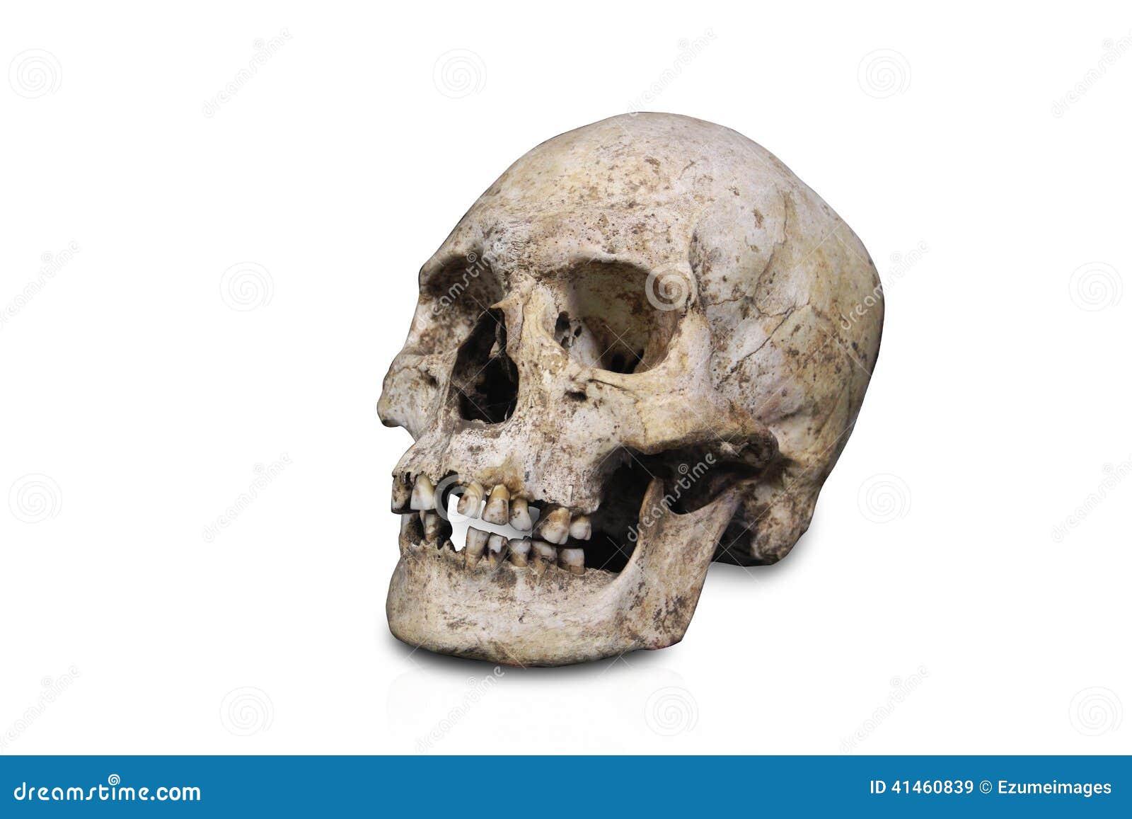 Schädel Lokalisierte Menschliche Anatomie Stockbild - Bild von ...
