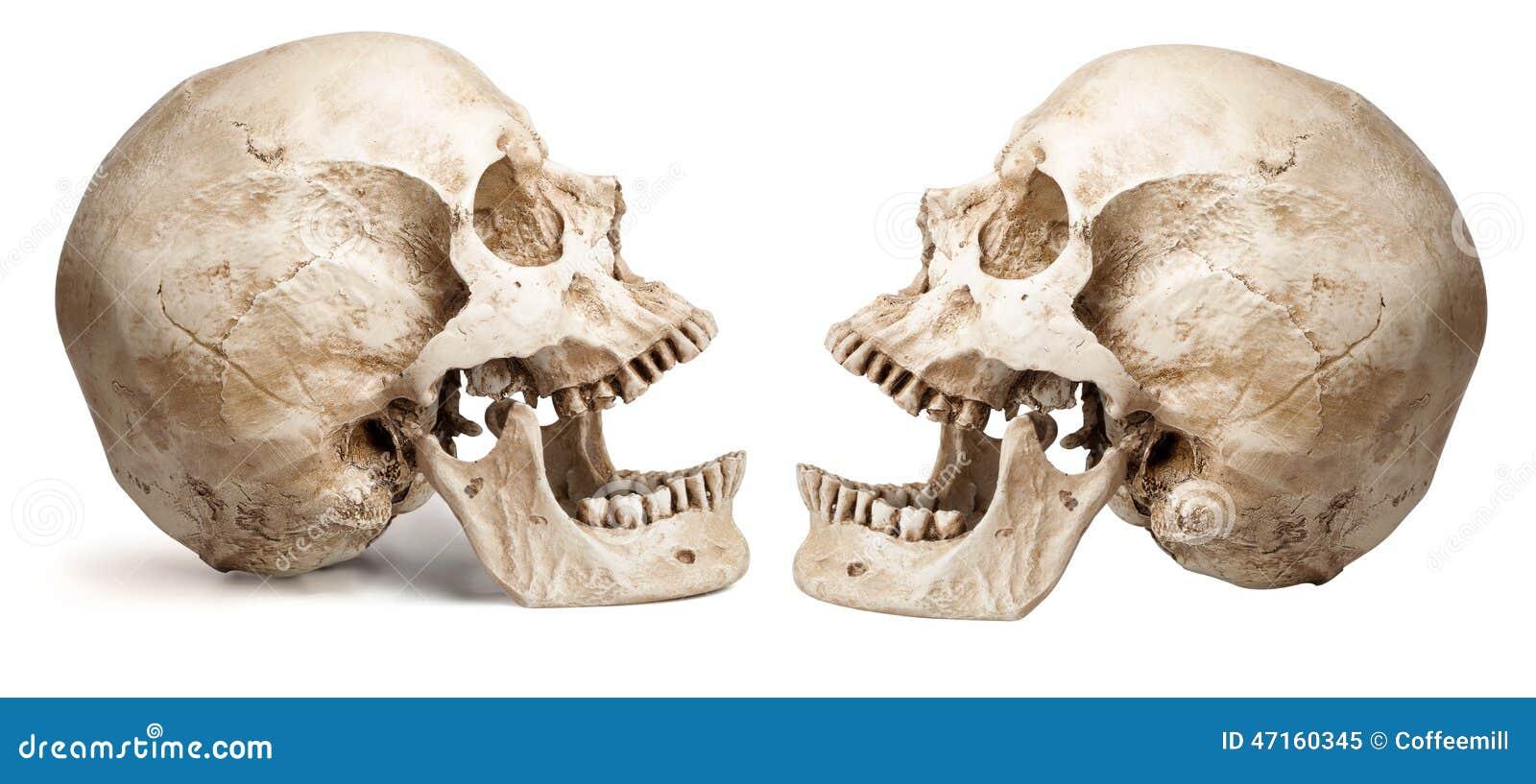 Charmant Rückseite Mund Anatomie Ideen - Anatomie Ideen - finotti.info