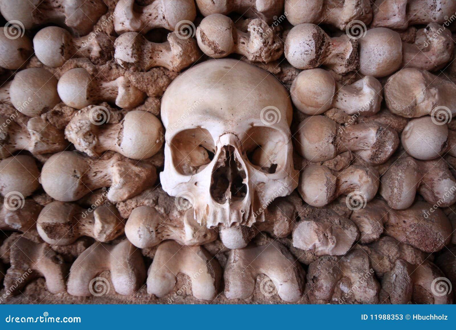 Schädel zentrierte in einer Knochenwand