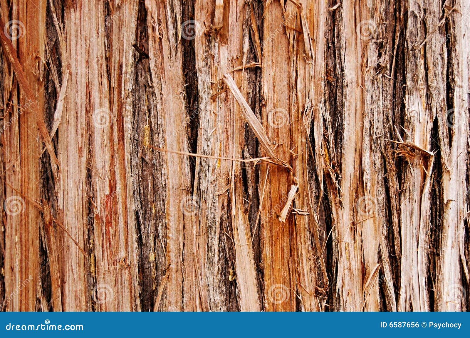 Schädigendes Holz