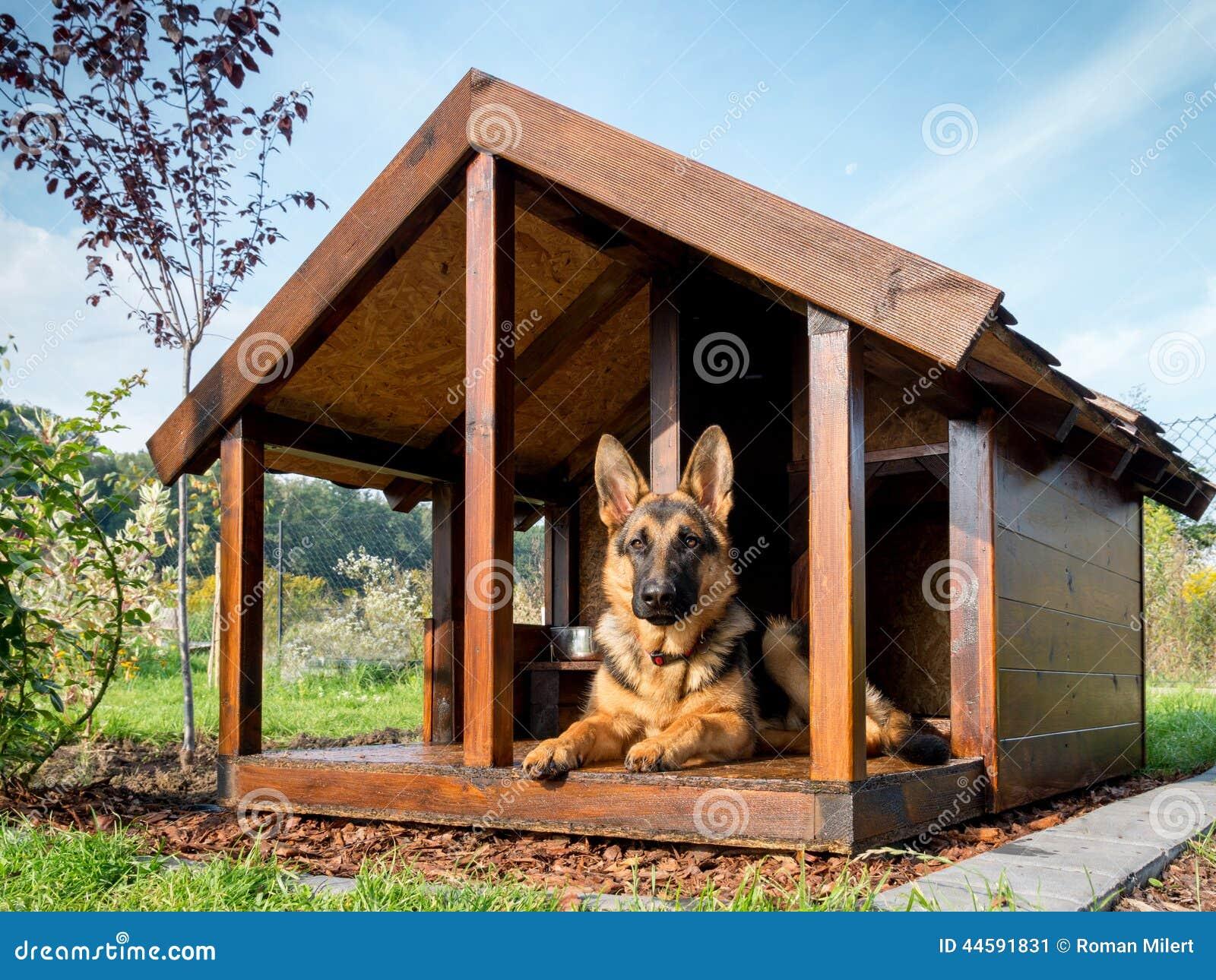 schäferhund in seiner hundehütte stockbild - bild von draußen, ruhe