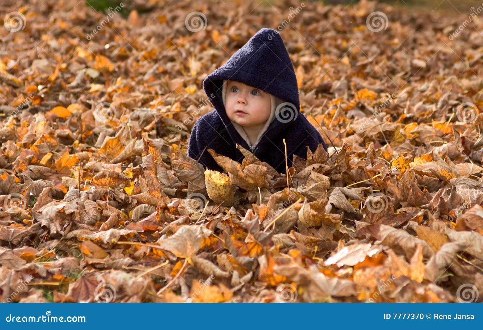 Schätzchen abgedeckt durch Herbstblätter