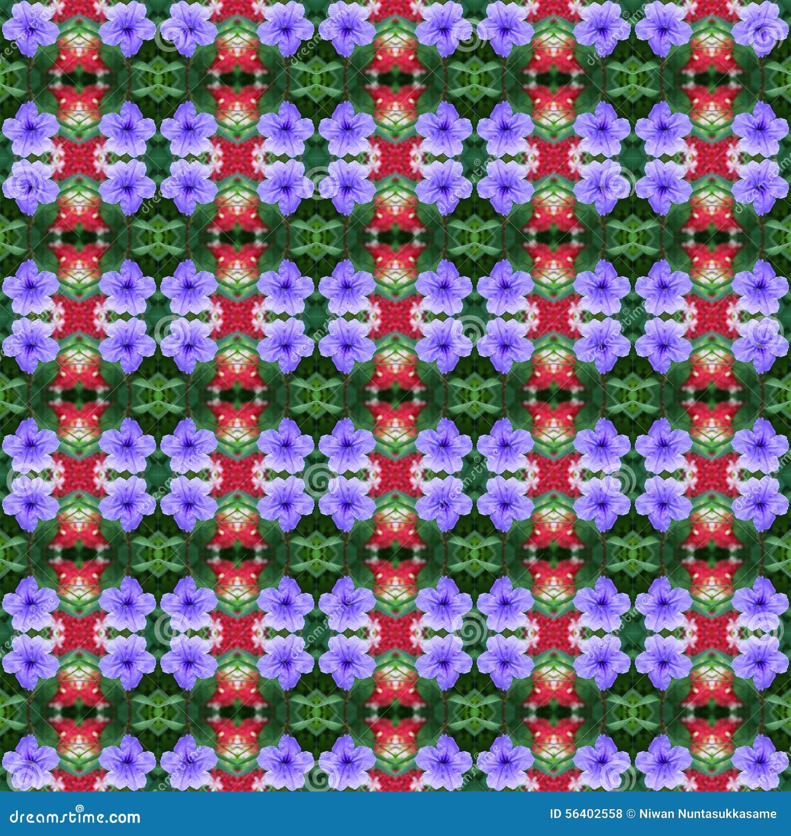 Schön von hellen seamles Ruellia-tuberosa Linnf in voller Blüte