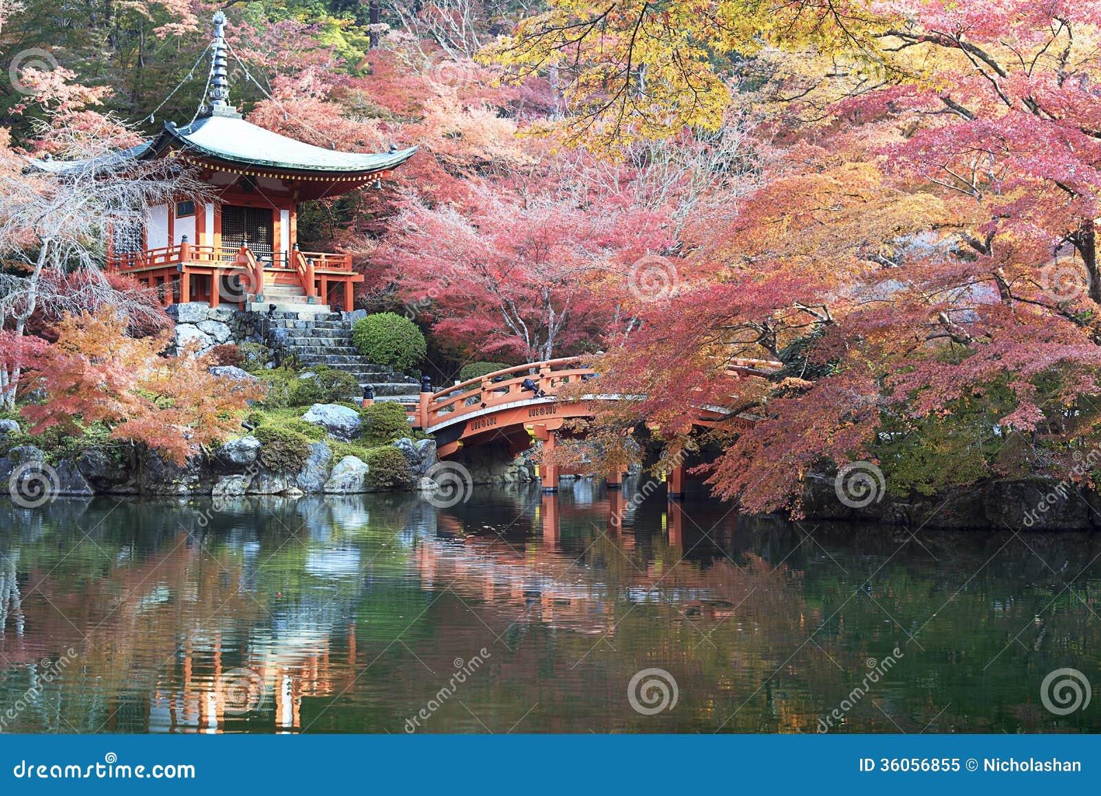 Schöne Ahornjahreszeit in Japan
