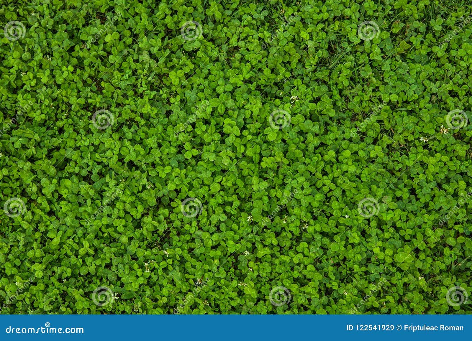 Schöne Beschaffenheit des grünen Grases