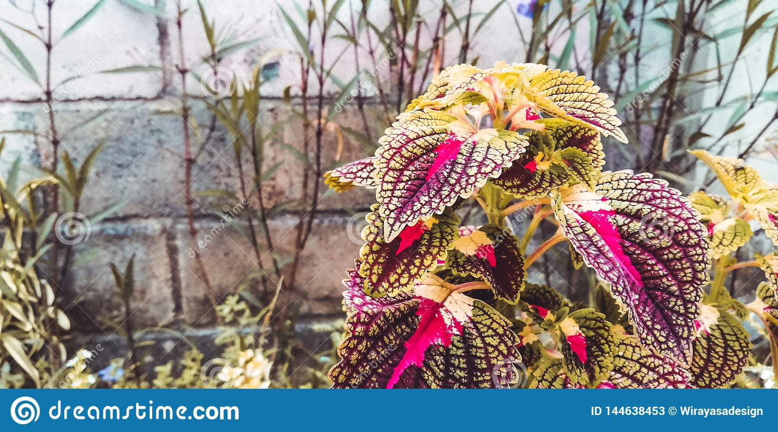 Schöne Blätter sind, für Hintergründe wie Webseiten und auch für Förderungsmedienhintergründe rot