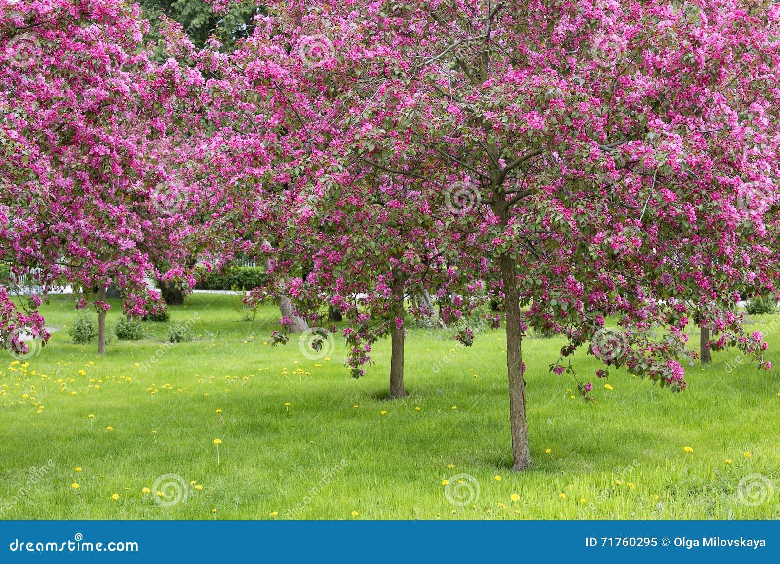 Schöne Blühende Bäume Im Frühjahr Stockbild Bild Von Grün Schön