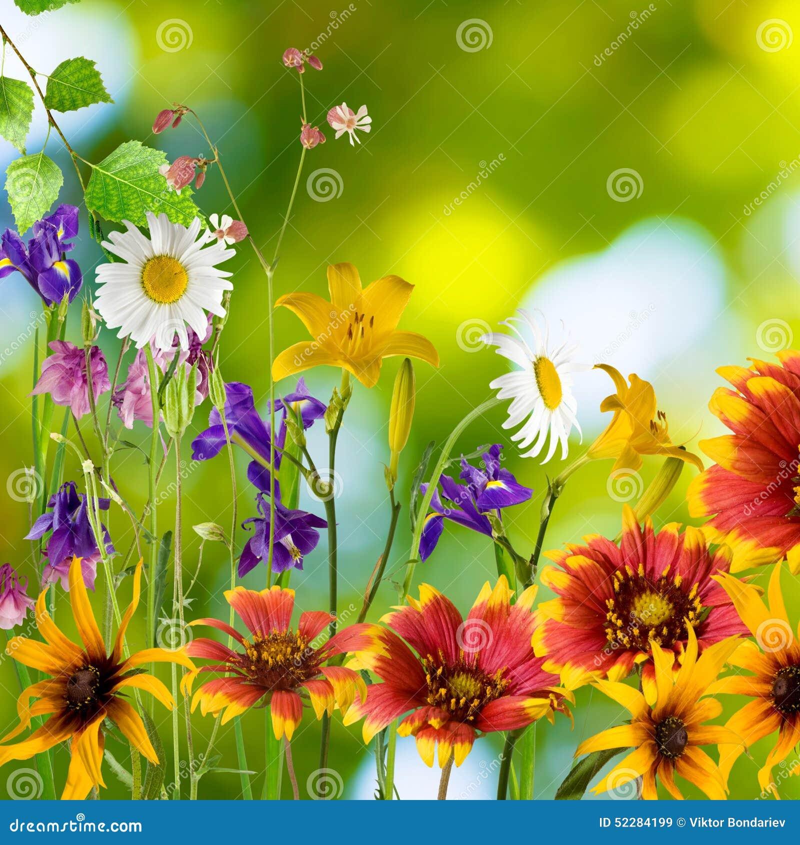 Schöne Blumen Im Garten Auf Einem Grünen Hintergrund Stockbild