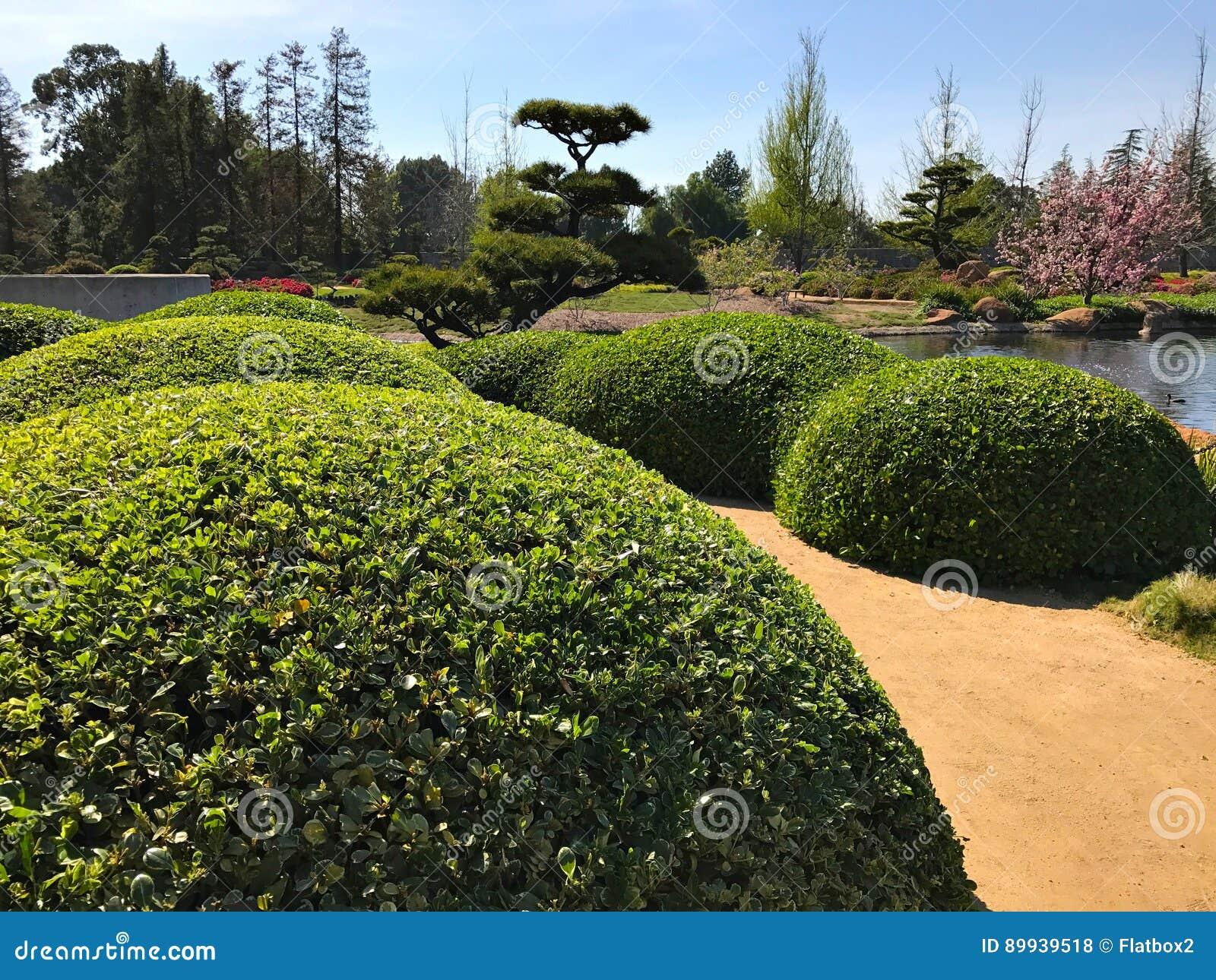Schöne Blumen Und Bäume Im Japanischen Garten Stockfoto Bild Von