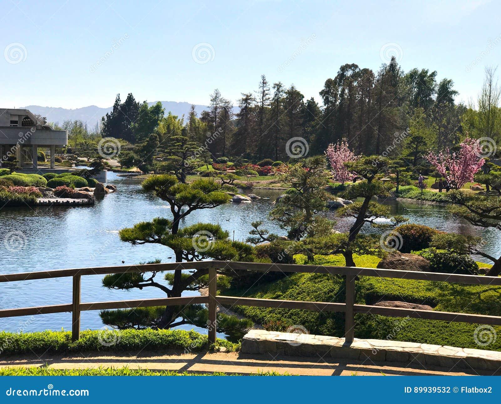 Schöne Blumen Und Bäume Im Japanischen Garten Stockfoto - Bild von ...