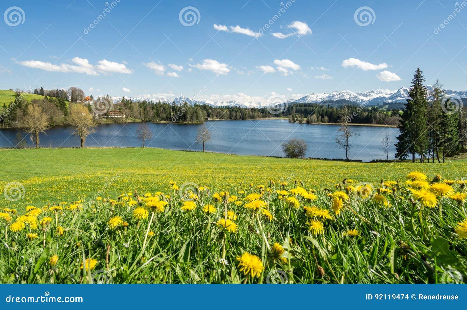 Schöne Blumenwiese Am Seeufer Und Schnee Bedeckte Berge Stockfoto