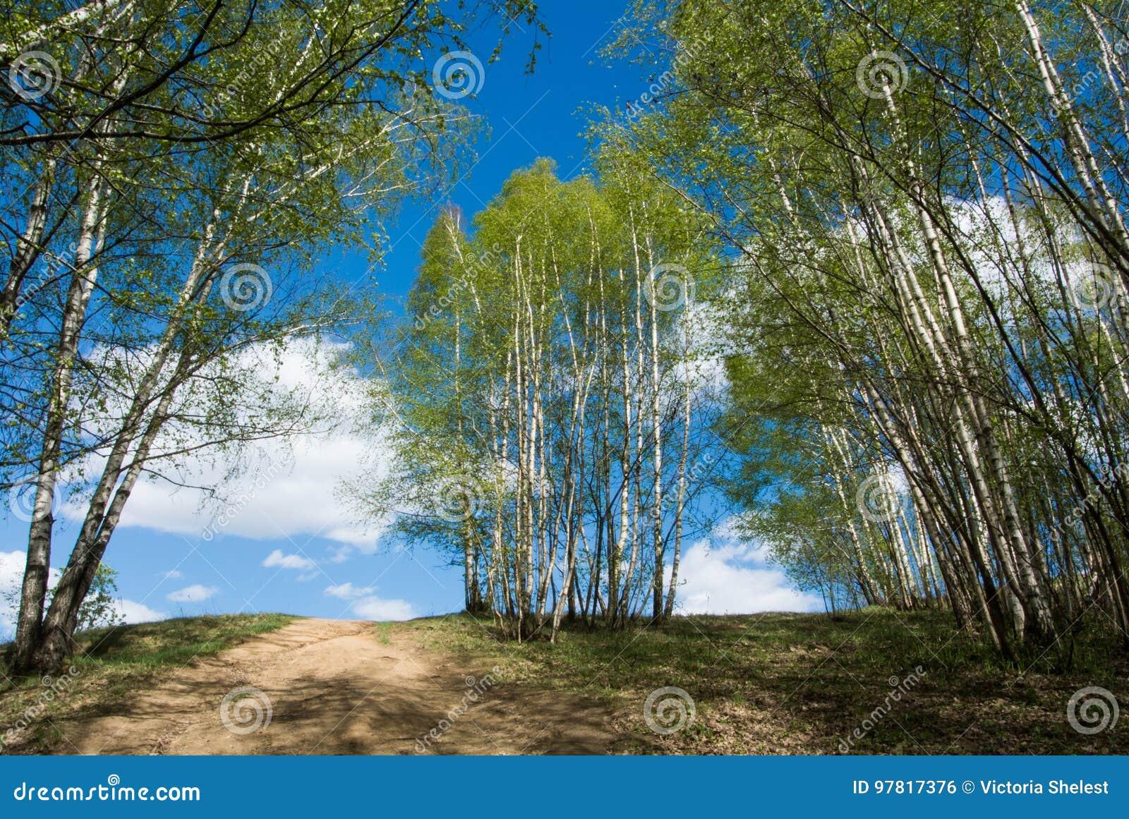 Schöne bunte grüne Sommerlandschaft mit einem Hügel und jungen Birken und ein blauer Himmel mit Wolken am Hintergrund