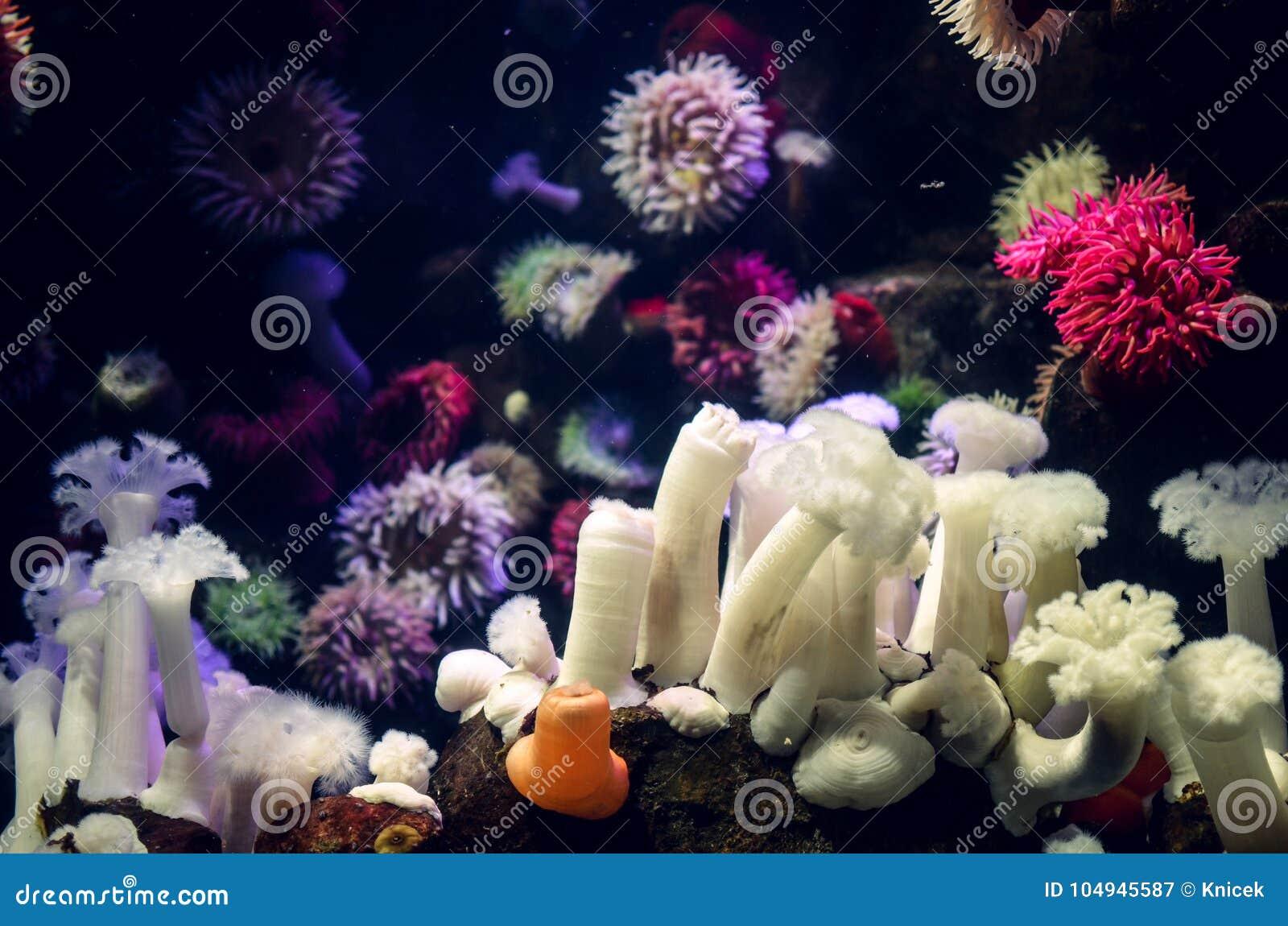 Schöne Bunte Seeanemonen, Einige Verschiedene Arten Warme Farben