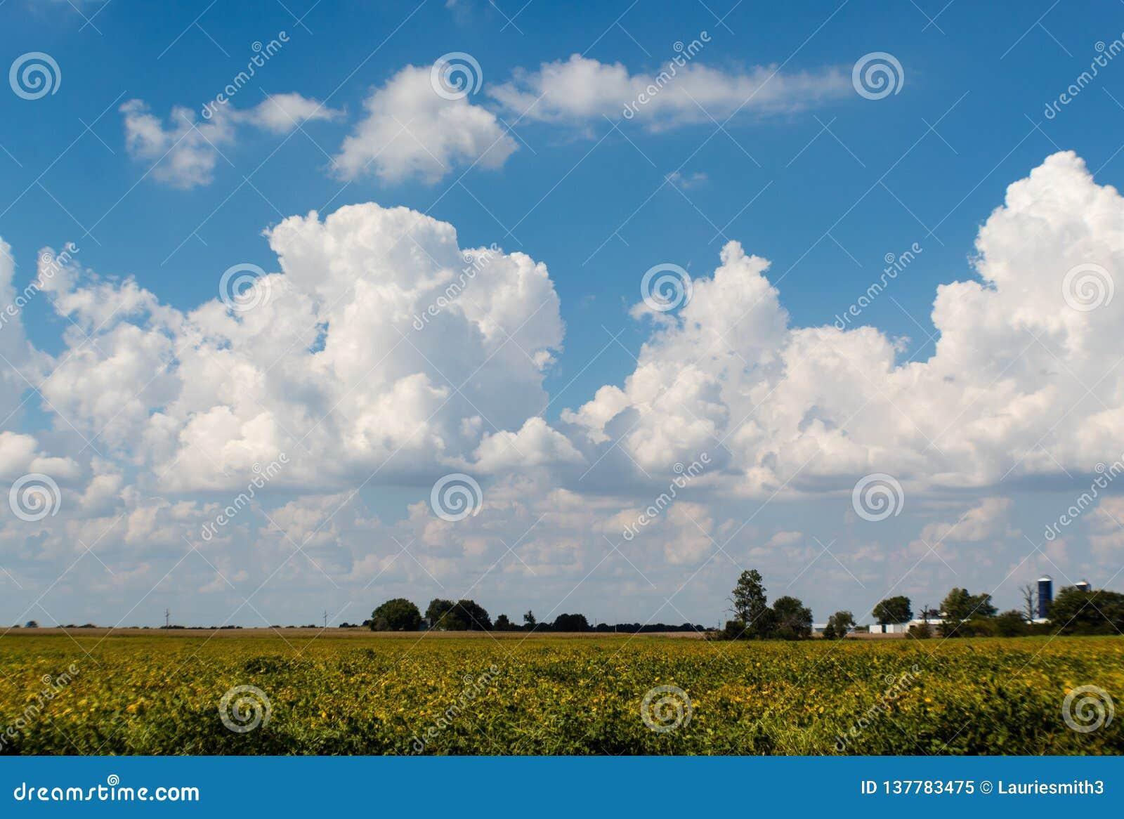 Schöne cumulous Wolken in einem blauen Himmel über ländlichem Illinois-Ackerland