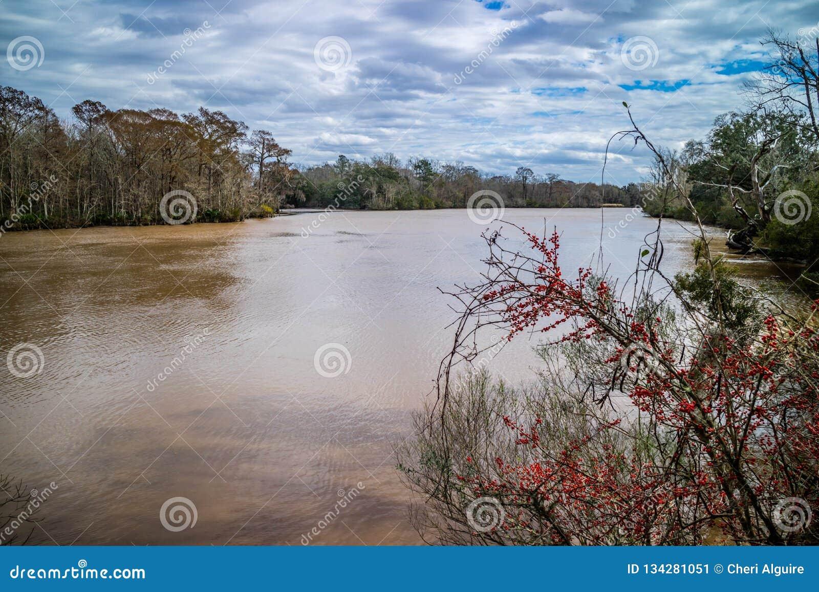 Schöne Evangeline Pond in St. Martinville, Louisiana