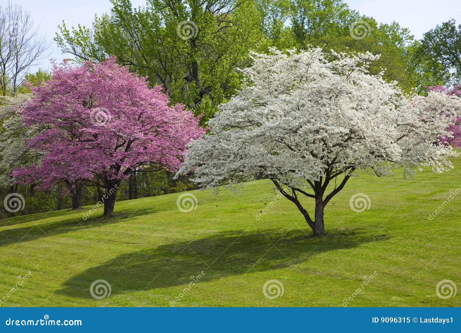 Schöne Frühlings-Farben