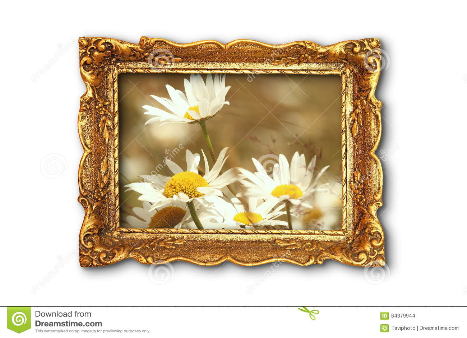Schöne Gänseblümchen Im Alten Gemälderahmen Stockfoto - Bild von ...