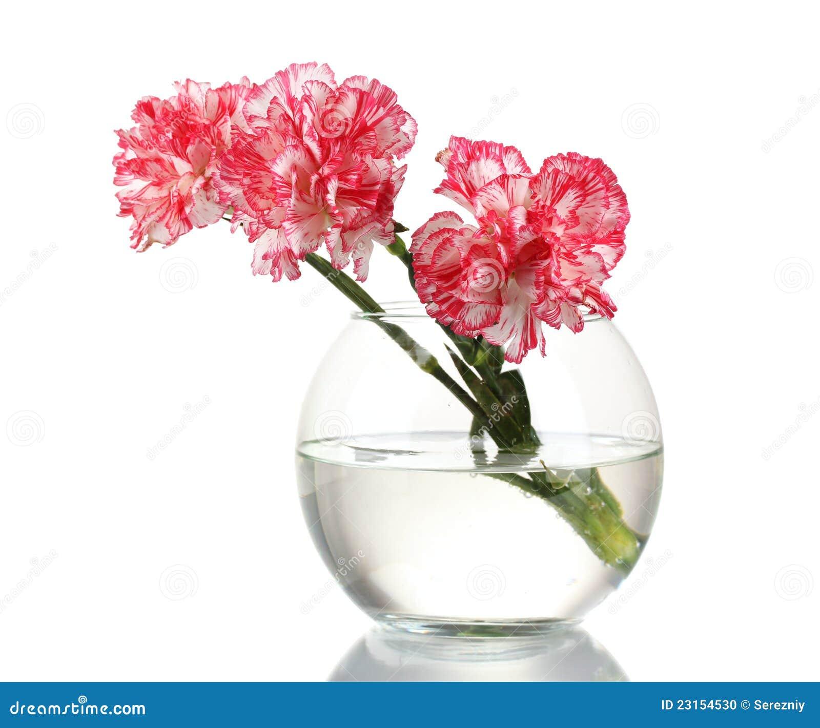 Schöne Gartennelken im transparenten Vase