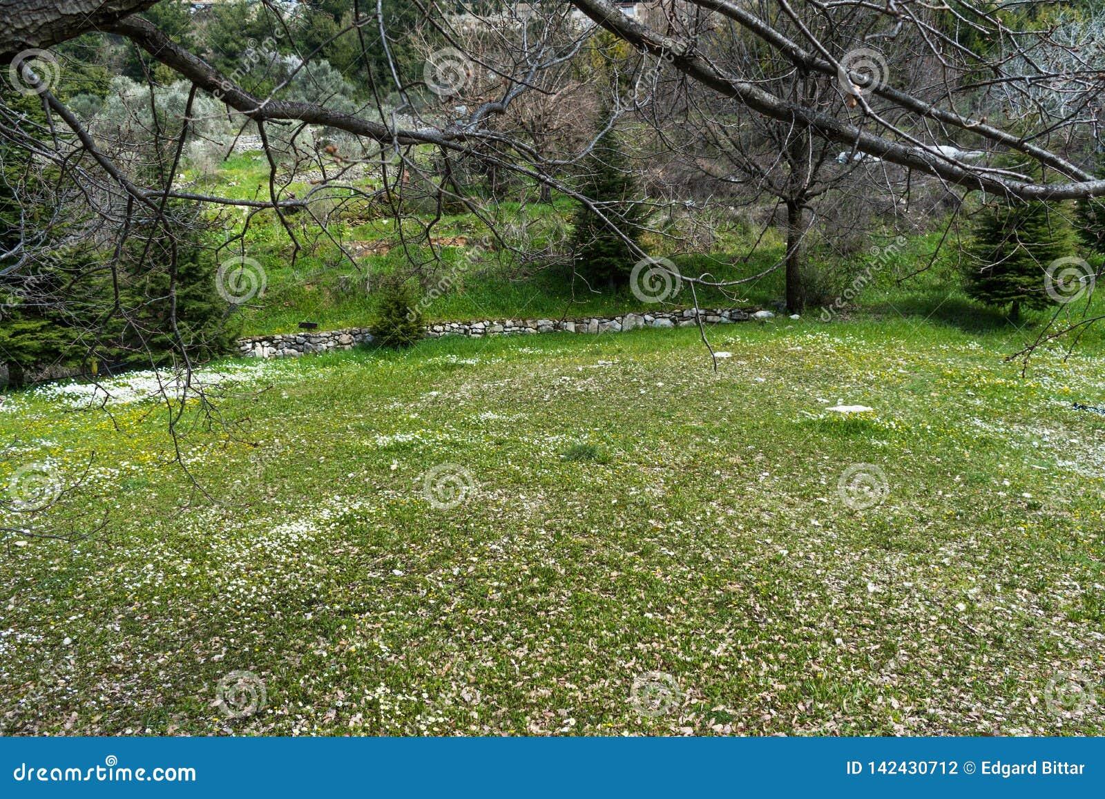 Schöne Gefangennahme eines natürlichen Gartens