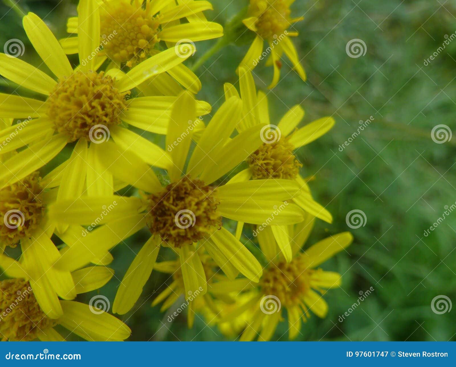 Schöne gelbe Blumen