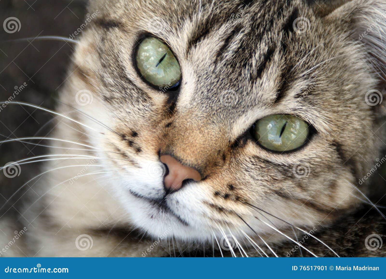 Schöne grüne Katzenaugen stockbild. Bild von katzenaugen - 4