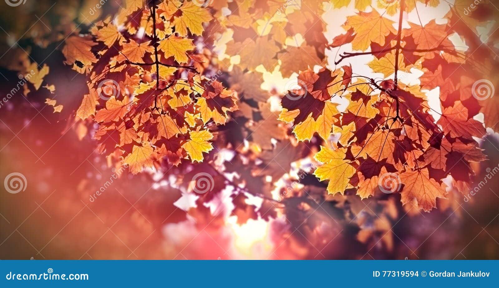 Schöne Herbstliche Blätter Am Späten Nachmittag U. An X14; Herbst ...